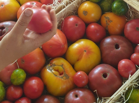 Le Cayre de Valjancelle - Bruno Cayron et Isé Crébely - Tomates anciennes en mélange - 5,5kg