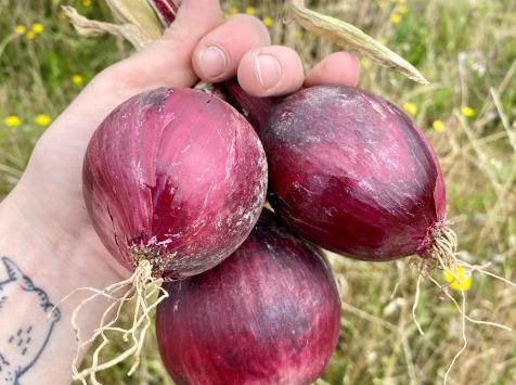 EARL Langevine - Oignons Rouges Bio - 1kg