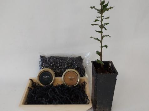 ALENA la Truffe d'Aquitaine - Coffret Trufficulteur : Plantez Votre Chêne Truffier Et Dégustez Maintenant