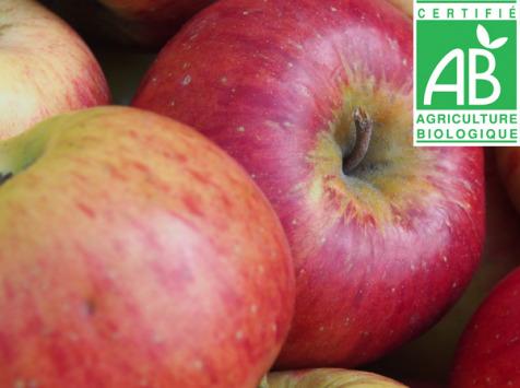 Mon Petit Producteur - Pomme Bio Elstar - 3kg