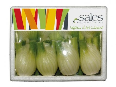 Maison Sales - Végétaux d'Art Culinaire - Mini Fenouil Bulbe - 8 Pièces