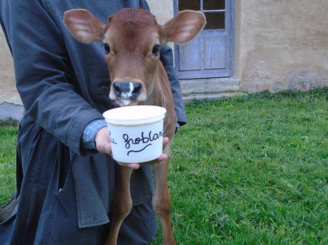 La Ferme de l'Abbaye - Fromage Blanc au lait de vache Jersiaise : le Froblanc
