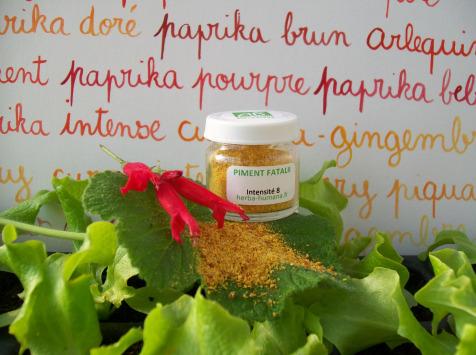 HERBA HUMANA - Piment Fatalii Bio Cultivé en France 3 g