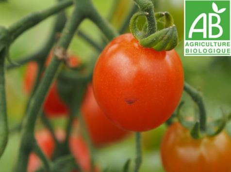 Mon Petit Producteur - Tomates Cerises