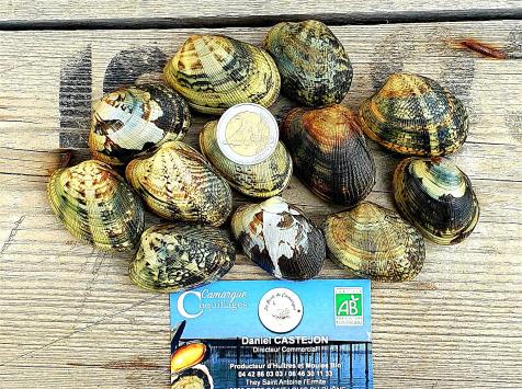 Camargue Coquillages - Palourdes Blanches De Camargue À Farcir - Pêche Responsable