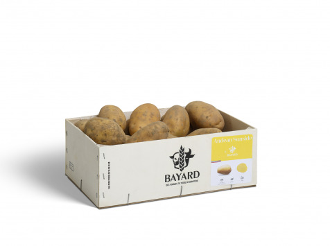 Maison Bayard - Pommes De Terre Andean Sunside - 3kg