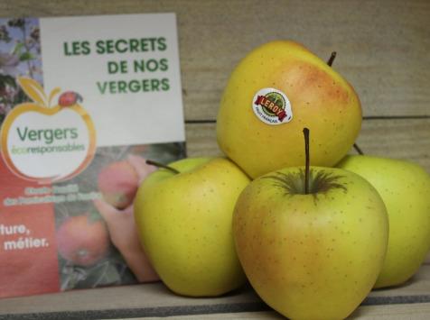Le Châtaignier - Pommes Golden - Colis 15 Kg