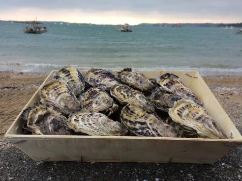 Les Huîtres Chaumard - Huîtres de Saint-Riom N°3 - bourriche de 50 pièces