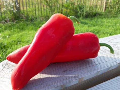 Le Châtaignier - Poivron rouge - 1 kg