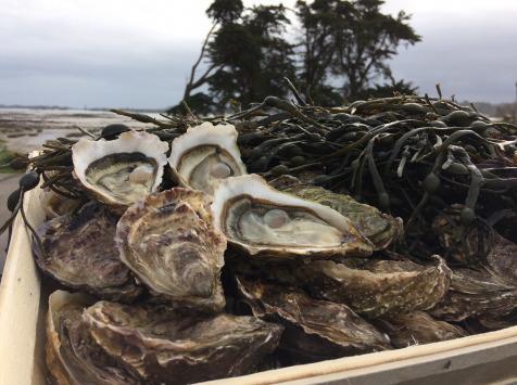 Les Huîtres Chaumard - Huîtres De Paimpol N°2 - Bourriche De 100 Pièces (8 Douzaines)