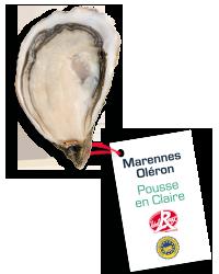 Les Huîtres Courdavault Alain & Fils - Pousse En Claire Taille 1= 6 Huîtres 150 Grammes +