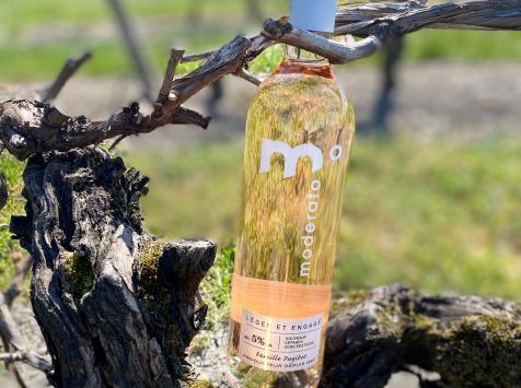 Moderato - Rosé Moderato, 5% d'alcool - 6 Bouteilles
