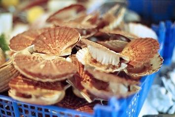 Luximer - Coquilles Saint Jacques Bretonnes Vivantes 6kg pêchées à la drague