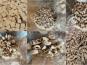 Païs'an Ville - Découverte Bio Pâtes Artisanales  Au Blé Ancien des Populations Complet Et Semi-Complet En Vrac 5.5kg