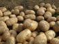 La Boite à Herbes - Pomme De Terre Monalisa Bio - 1kg
