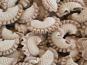 L'Atelier à Pâtes - Pâtes Crêtes De Coq Sèches Aux Cêpes