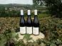 SANCERRE DOUDEAU-LEGER - Vent d'Ange - Vin de Pays du Val de Loire Rouge IGP 2018 - 3 Bouteilles
