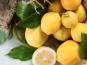 La Maison du Citron - 2,5 Kg de Citrons de Menton IGP