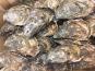 AQUADIS NATURELLEMENT - 12 Huîtres Creuses De Bretagne  N°3