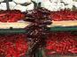 SEGIDA PIMENTE LA GASTRONOMIE - Corde Sèche De Piment D'espelette Aop 20/22 Piments