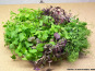 Les Jardins de Champlecy - Salade Box De Micro-pousses - 100g