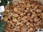 Trapon Champignons - Mousserons des prés