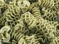 L'Atelier à Pâtes - Pâtes Radiatore Nature Sèches Au Basilic