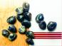 Thaëron - Palourdes - Barquette de 500 g