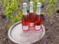 Champagne Deneufchatel - Champagne Deneufchatel Brut Rosé 3 X 75 Cl