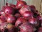 La Ferme du Polder Saint-Michel - Oignons Rouges Bio Filets 2,5kg