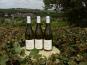 Sancerre Doudeau-Leger - Vent d'Ange - Vin de Pays du Val de Loire Blanc IGP 2020 - 3 Bouteilles