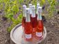 Champagne Deneufchatel - Champagne Deneufchatel Brut Rosé 6 X 75 Cl