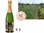 Le Clos des Motèles - Aoc Saumur Demi-sec. 3 Bouteilles