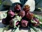 La Boite à Herbes - Artichaut Poivrade Violet De Provence - Bouquet De 5
