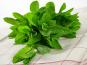 La Boite à Herbes - Menthe Fraîche - Sachet 50g
