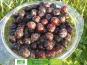 Les Jardins de Karine - Cerise noire avec noyau surgelée - 1 kg