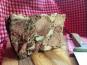 La Ferme de Cintrat - Terrine de jambonneau tranchée