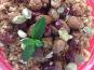 Colette Natural Food - Couscous Brun Sucré Cannelle, Beurre et Fruits Secs - Végétarien