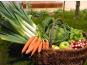 Au bon Jardinet - Panier de légumes de saison 15kg + petit cadeau :)