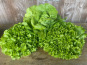 La Ferme du Polder Saint-Michel - Lot de 3 salades: laitue/feuille de chêne/batavia BIO