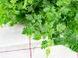 La Boite à Herbes - Cerfeuil Frais - Sachet 100g