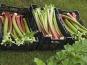 Au bon Jardinet - Rhubarbe 500g
