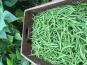 Ferme du Mont de Cuy - Haricots verts 1kg