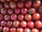 Ferme du Mont de Cuy - tomates plein champs