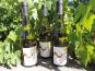 Domaine des Bourrats - Saint Pourçain AOC Blanc Cuvée des Bergerons - 3 bouteilles