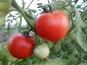 Multiproductions - Cédric Joliveau - Tomate Ronde Rouge, 1kg