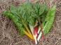 Ferme des petites Brossardières - Blettes - 1 kg