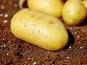 Le Châtaignier - Pommes De Terre Charlotte - 6kg