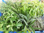 Les Jardins du Mas de Greil - Bouquet Garni, Bouquet Frais