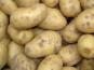 Julien Bouche - Maraîcher Bio - Pomme De Terre Agata 5kg